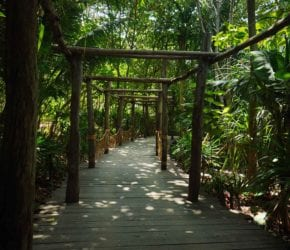 Beautiful wooden pathways at Bawah Reserve, Indonesia